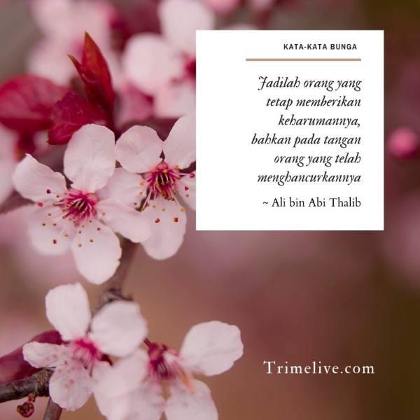 75 Kata-kata Tentang Bunga Bijak & Mutiara untuk Inspirasimu